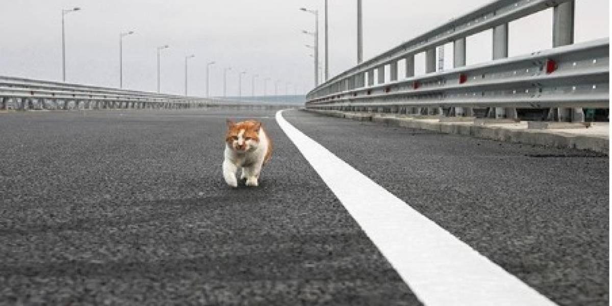 Putin fue eclipsado por un gato: felino inaugura el puente de Crimea antes que el presidente ruso