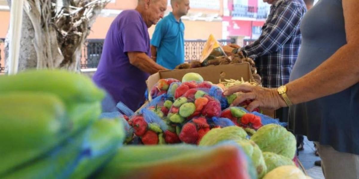 Arecibo celebra Mercado Urbano en su plaza pública