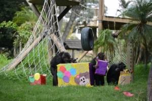 Chimpancés del zoológico La Aurora