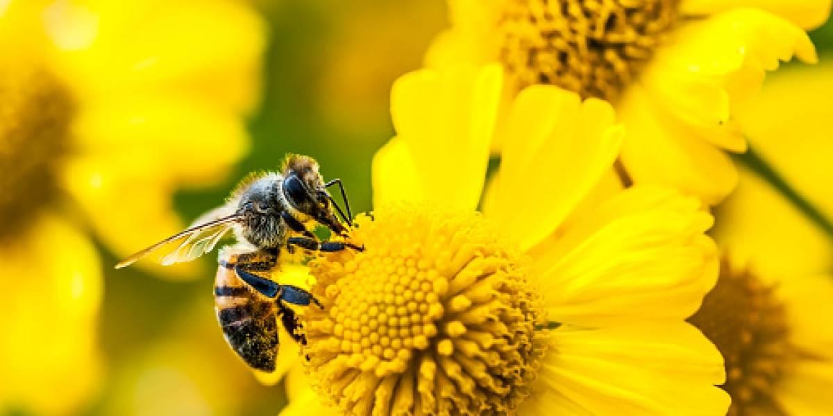 Día internacional de las abejas: El mundo celebra por primera vez a uno de los insectos más importantes para el hombre