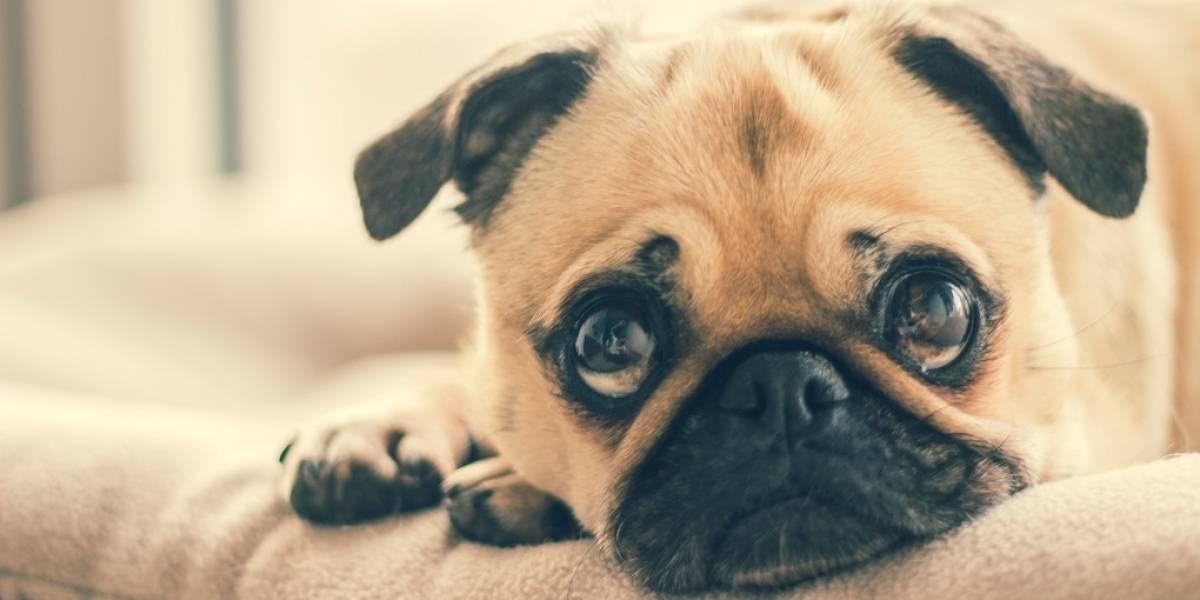 Te decimos cómo prevenir enfermedades en tu mascota y familia