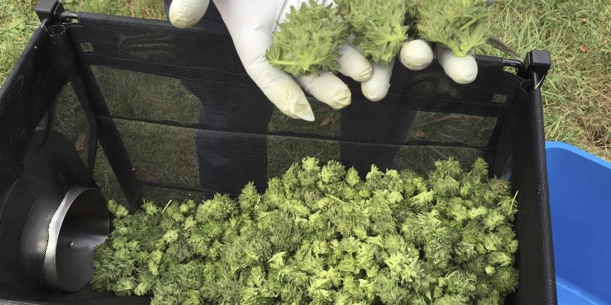 Hospitalizan a 25 personas por fumar marihuana sintética