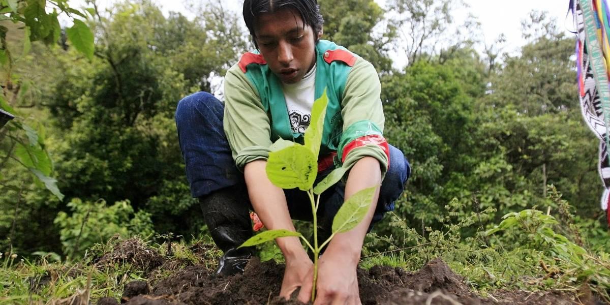 Se abre convocatoria para la séptima edición de los Premios Latinoamérica Verde 2020