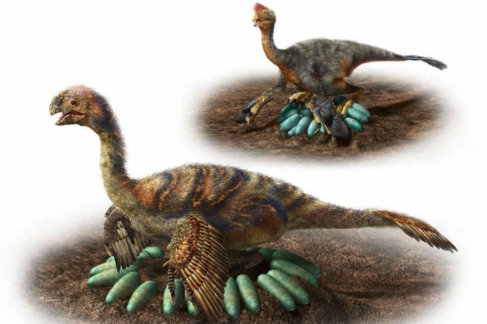 ¿Cómo hacían los grandes dinosaurios para incubar sus huevos sin aplastarlos?