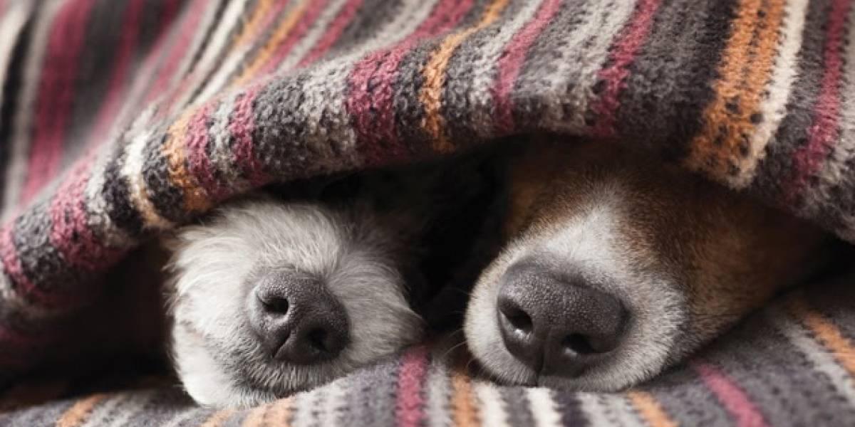 Saiba como cuidar do seu pet na estação mais fria do ano