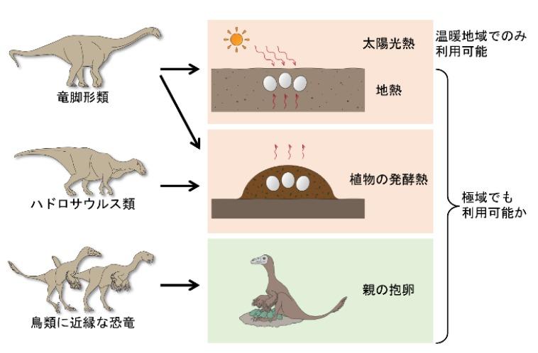 Algunos dinosaurios podían pesar hasta 2 toneladas, lo que dejaba una incógnita sobre cómo lograban darles calor a sus huevos sin hacerles daño.