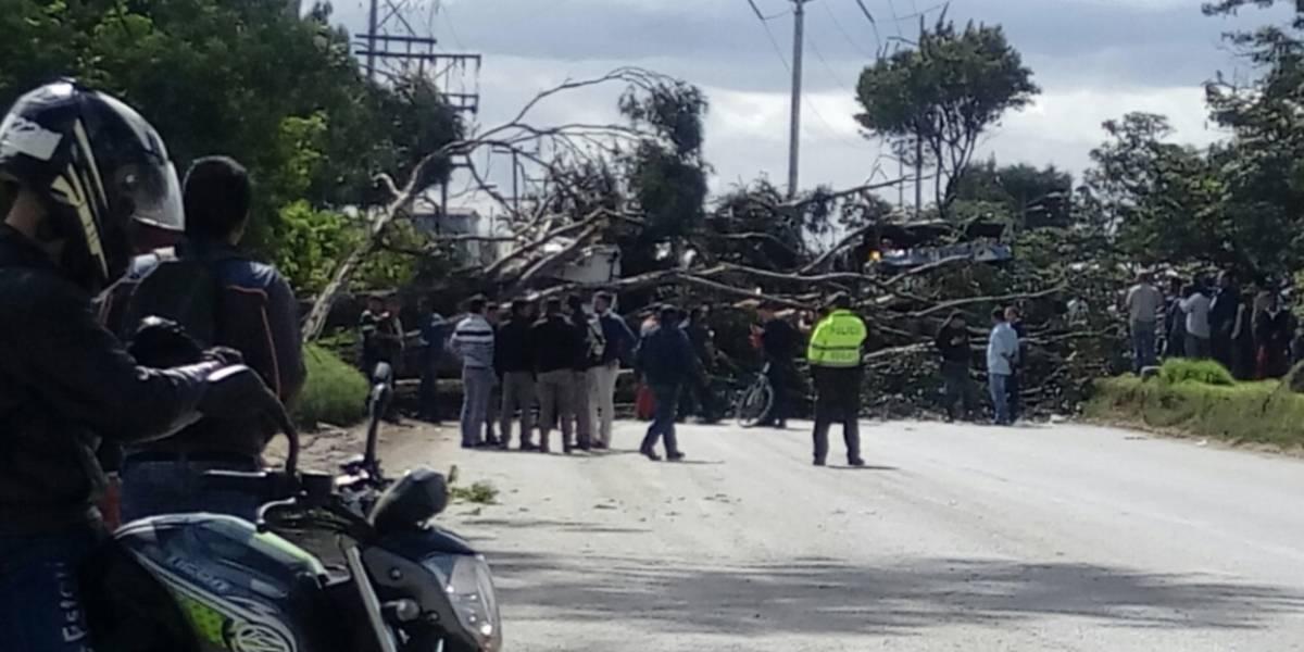 Dos personas lesionadas tras la caída de un árbol en el sur de Bogotá
