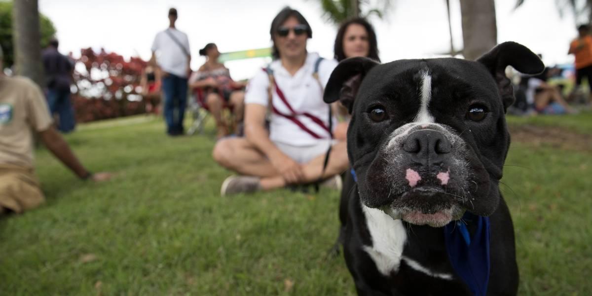 "Purina celebra ""Vive en Grande con tu Perro"""
