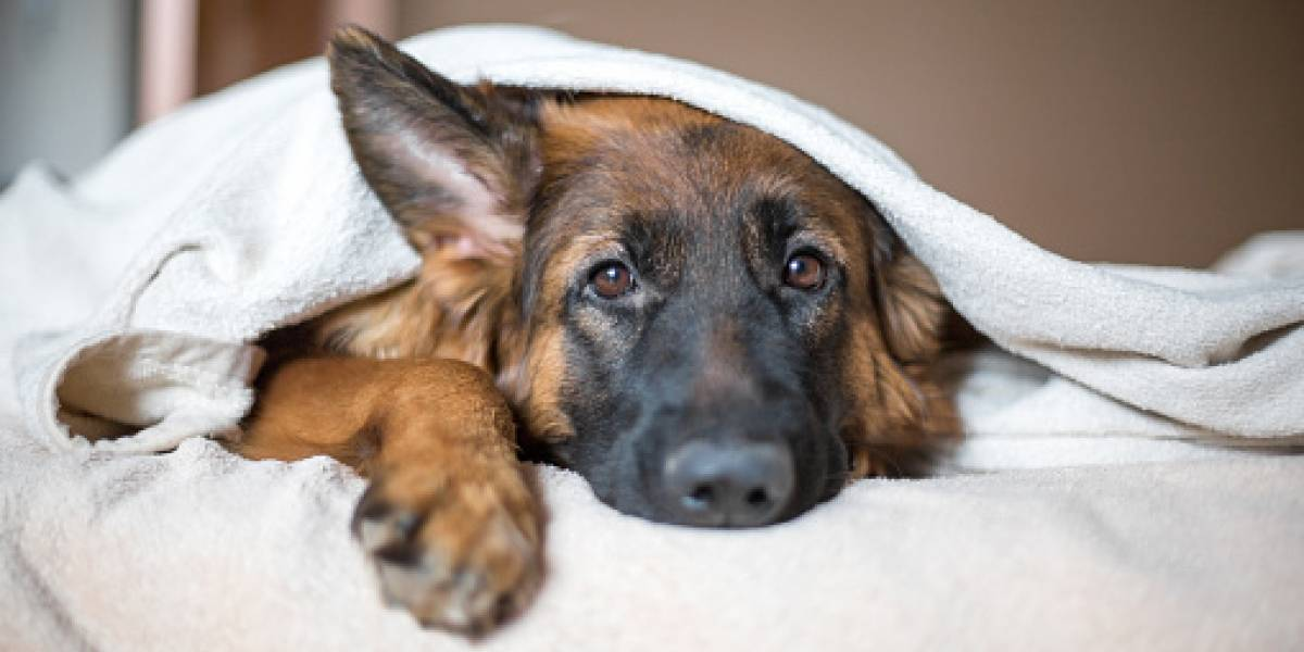 Sobre 60 clínicas veterinarias tendrán servicios de esterilización libre de costo