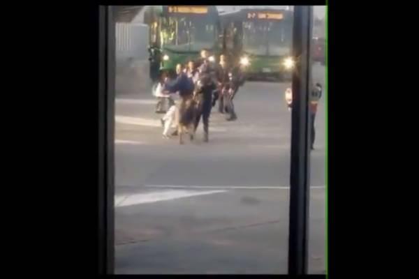 Perro maltratado en TransMilenio