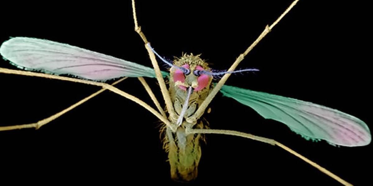 Como a malária evoluiu para se tornar letal aos humanos