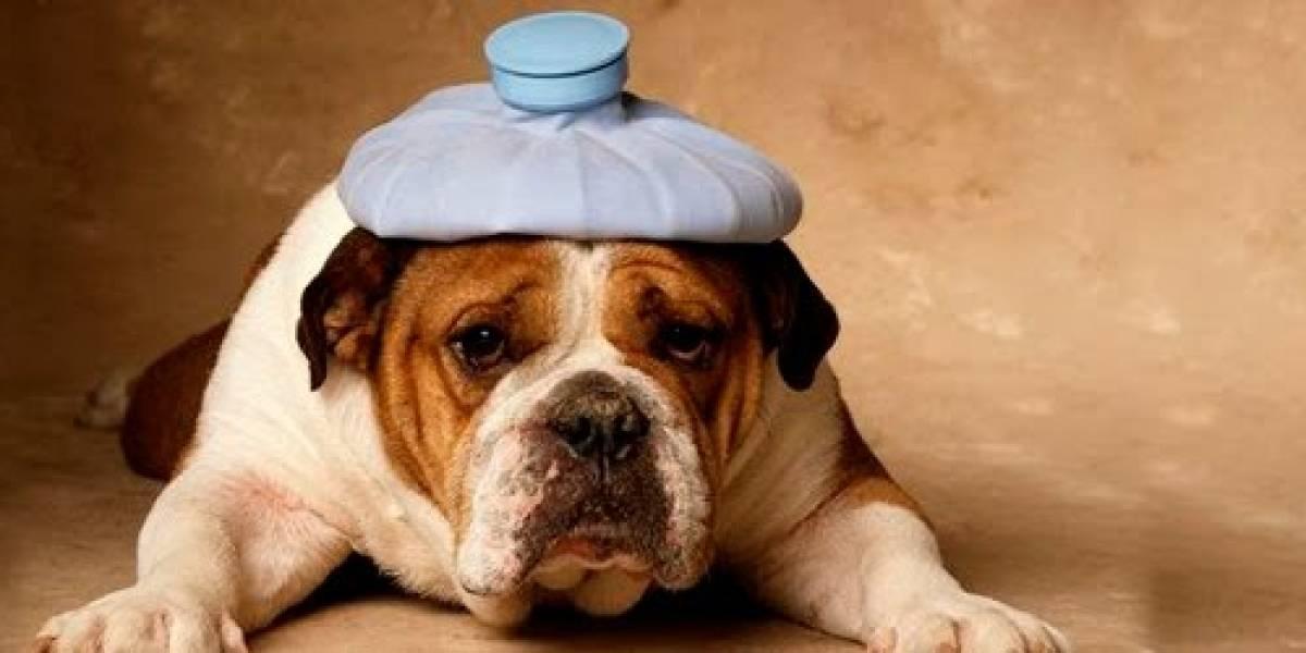 Cachorros também têm gripe! Saiba como proteger o seu pet nesse inverno