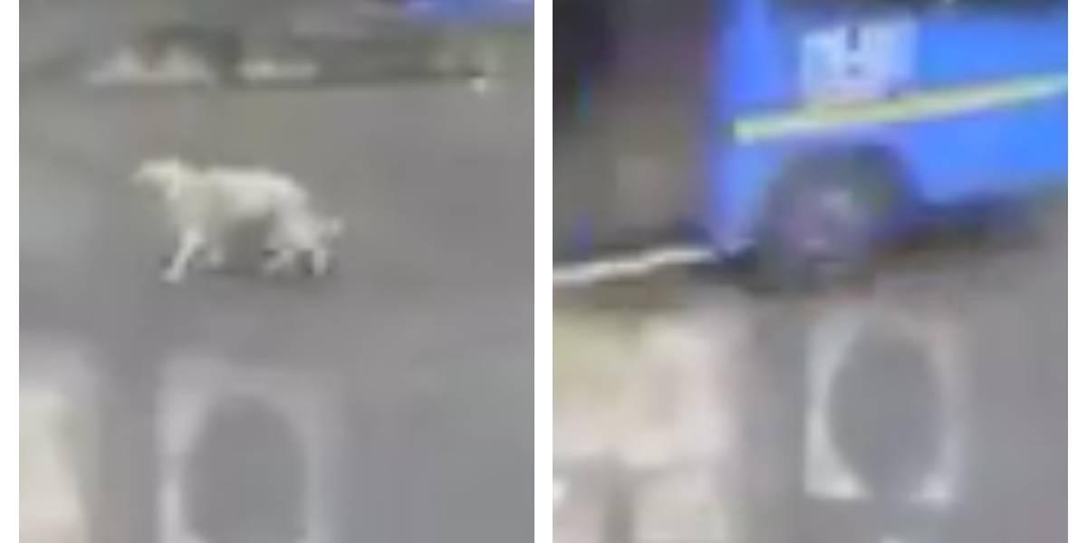 La sanción que recibió el conductor del Sitp que arrolló un perrito causándole a la muerte