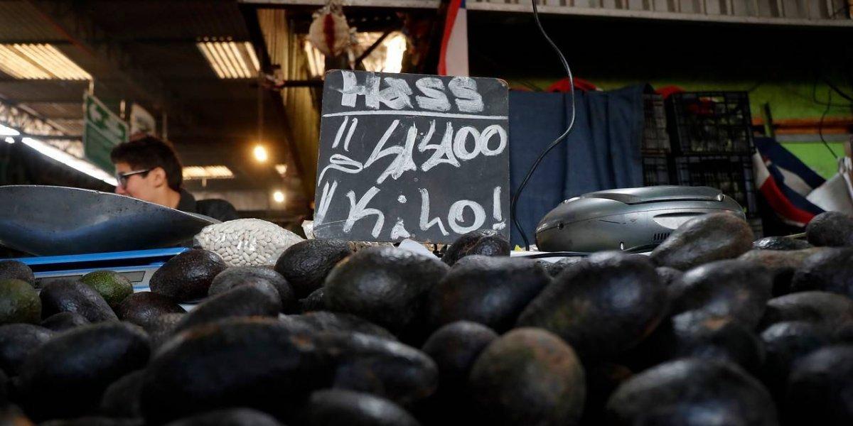 Insólito: sale más barato comprar la palta chilena en el extranjero que en el mismo país