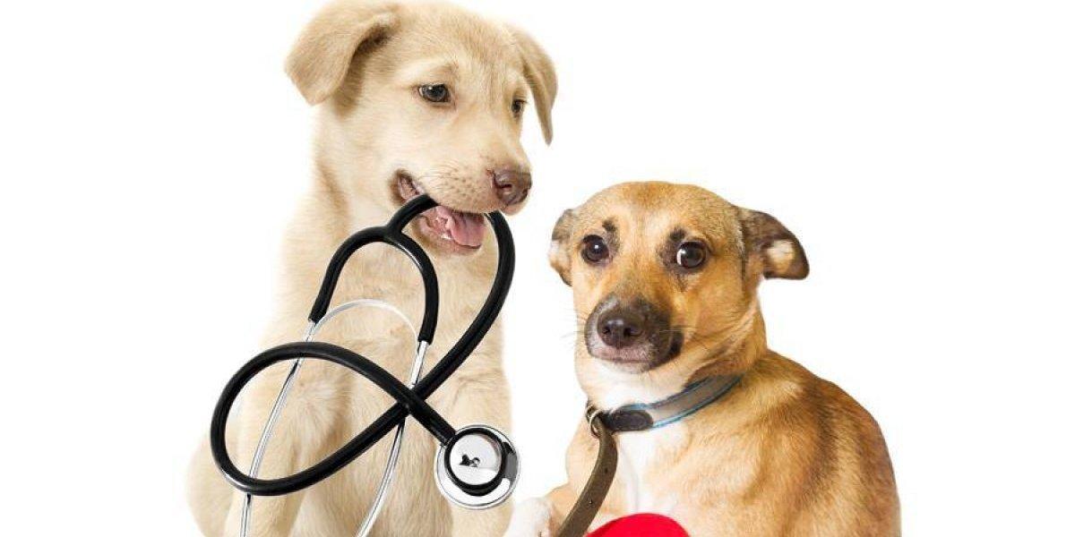 """¿Quieres que tu perro sea un """"dogtor""""? Asiste a esta convocatoria"""