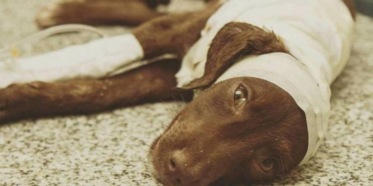 """""""El Cholito argentino"""": Condenado a un año de prisión por despellejar a un cachorrito"""
