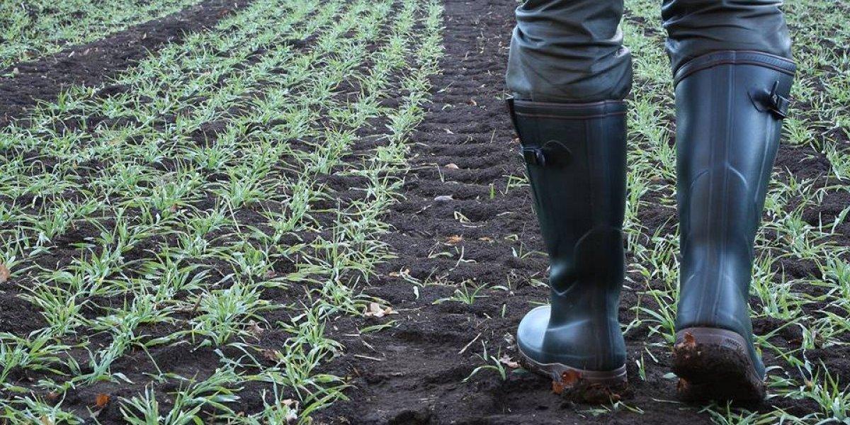 Esfuerzo Seguro, el primer seguro contra exceso de lluvia, sequía y terremotos