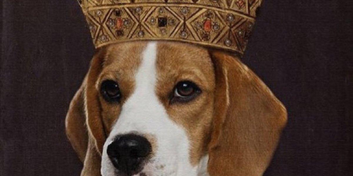 Este es el perro de Meghan Markle que vivirá como un rey