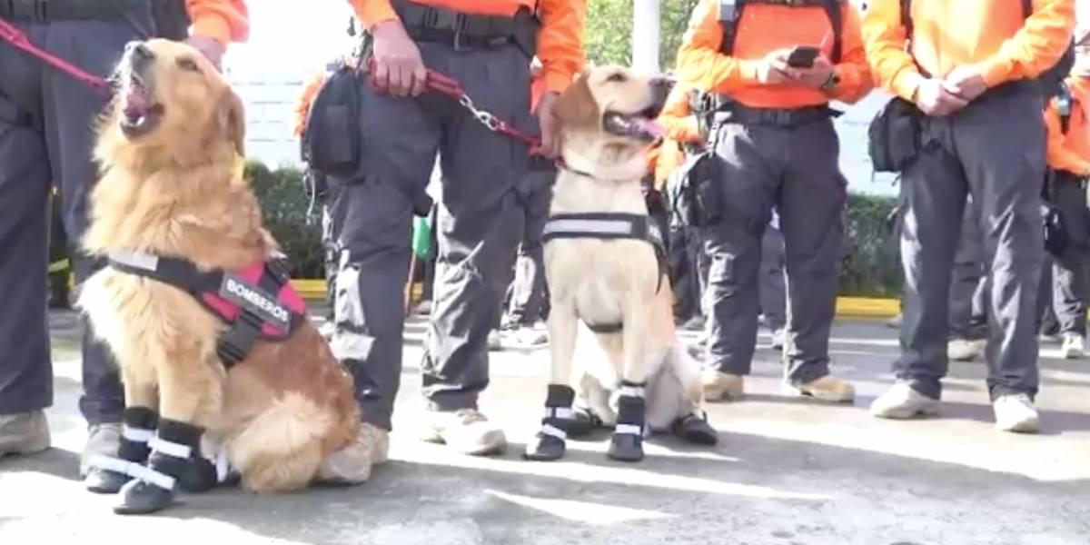 Unidad Canina del Cuerpo de Bomberos de Quito tiene nuevos integrantes