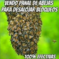 Meme ataque abejas