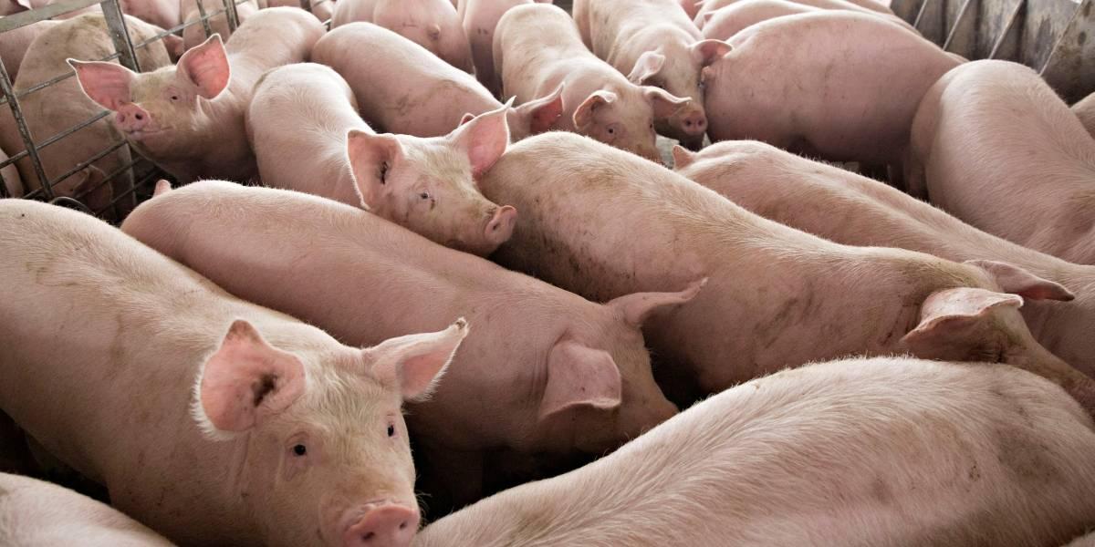 Mais de um bilhão de animais podem morrer por falta de ração