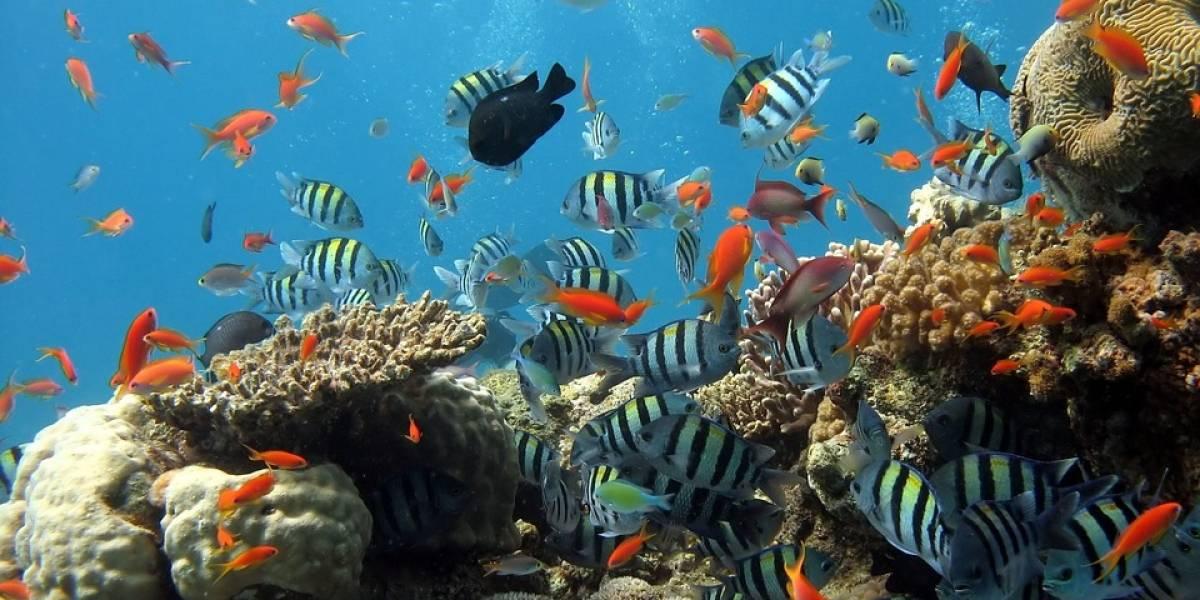 Xbox presenta la iniciativa Minecraft Coral Crafters para la preservación de los arrecifes de coral
