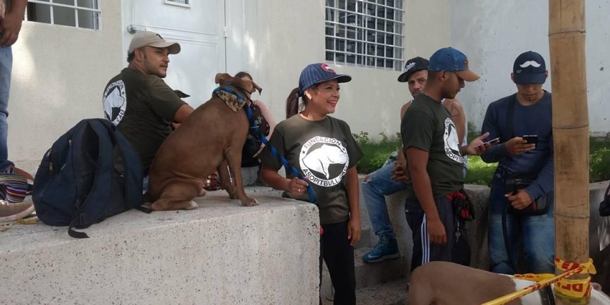 ¿Tiene un perro de raza potencialmente peligrosa?, regístrelo en esta brigada