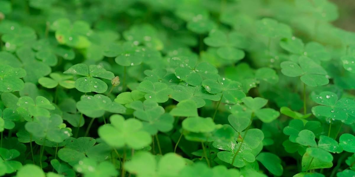 Dia de Sorte: Confira o resultado do concurso 3 da nova loteria da Caixa