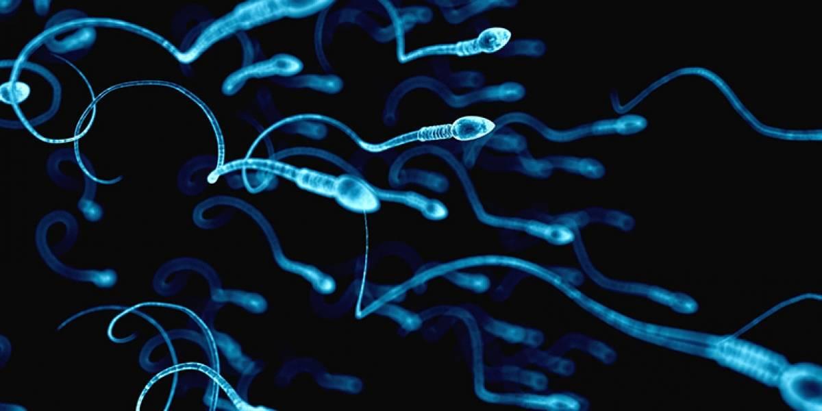 Altos, inteligentes, de piel clara y ojos azules: así son los espermatozoides que mandan a pedir las chilenas al extranjero