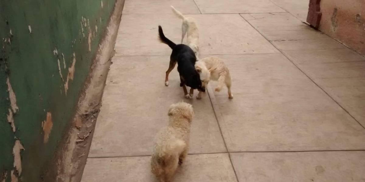 Fundación Eduardo Natividad busca rescatar perros callejeros