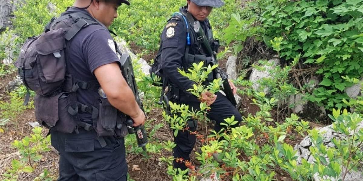 PNC localiza por primera vez plantación de coca y un laboratorio para procesarla