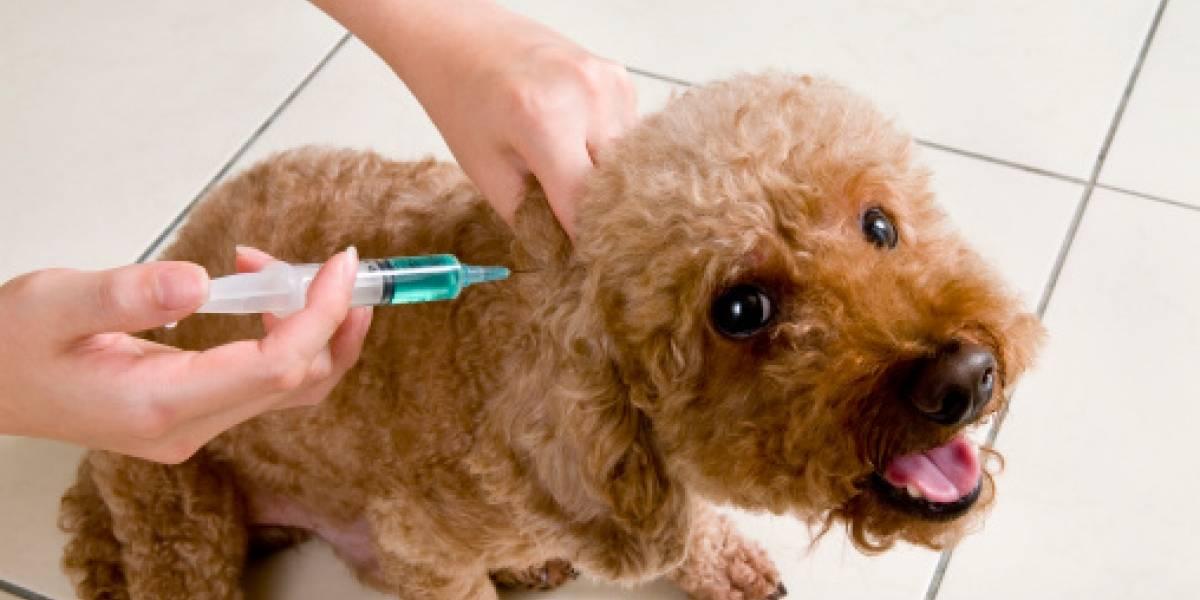 Desde el 1 al 30 de junio se puede vacunar contra la rabia a las mascotas