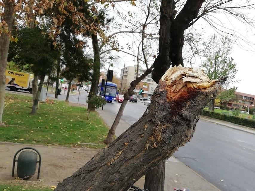 Hay 55 árboles caídos en Las Condes y varias decenas más en el resto de Santiago