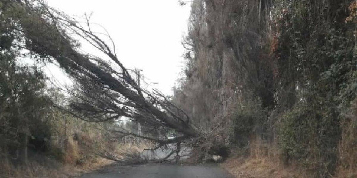 Vidrios quebrados, corte de luz y caída de árboles: el descomunal saldo del fuerte viento en el sector oriente de Santiago
