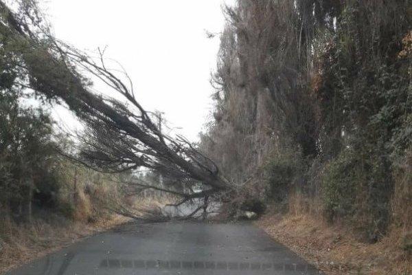 Caída de árboles ha dejado el viento en la RM