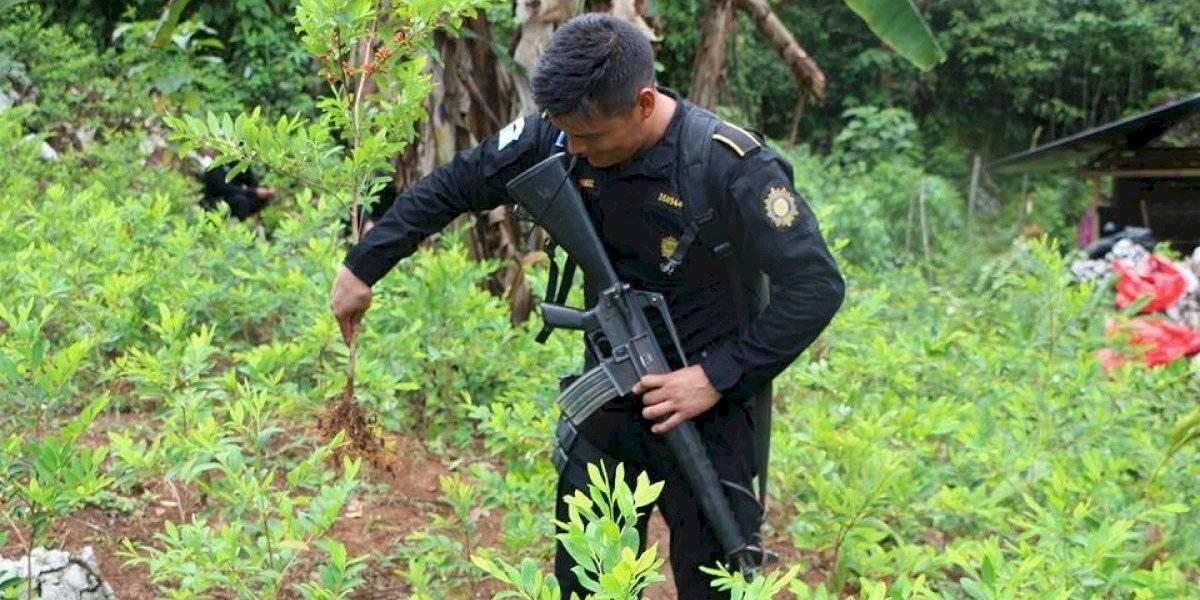 Guatemala, entre los países productores de hoja de coca