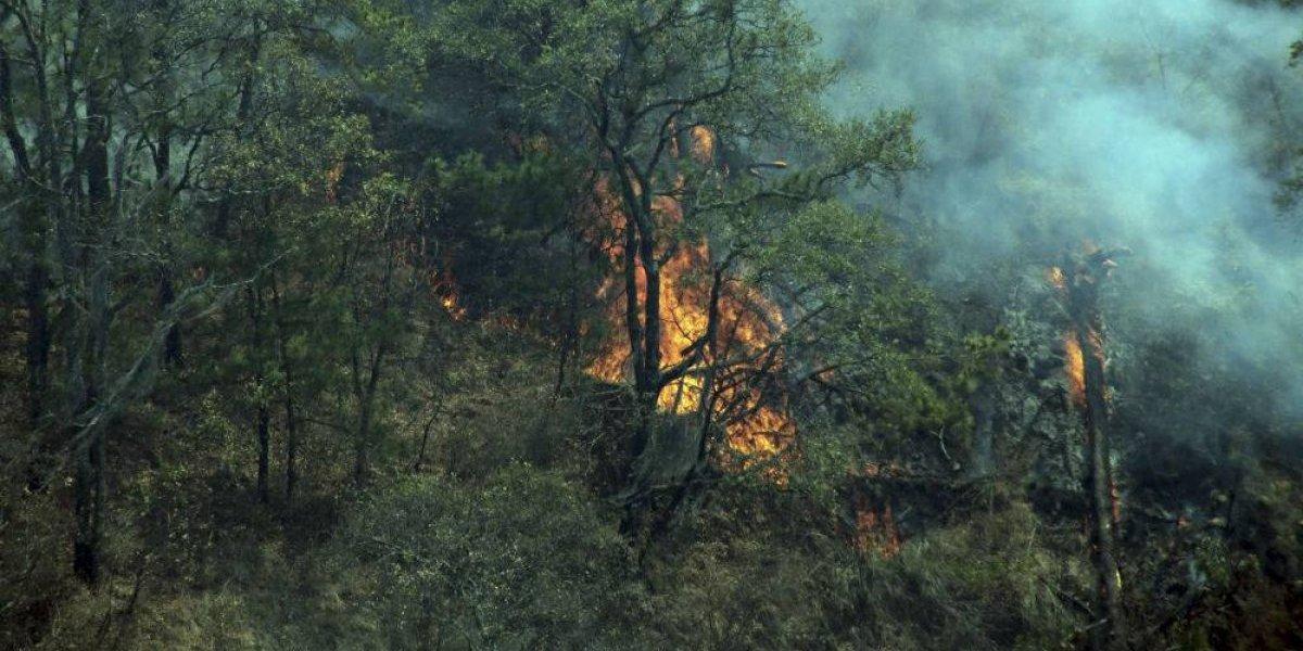 Alertan por alto riesgo de incendios forestales en 15 estados por ola de calor