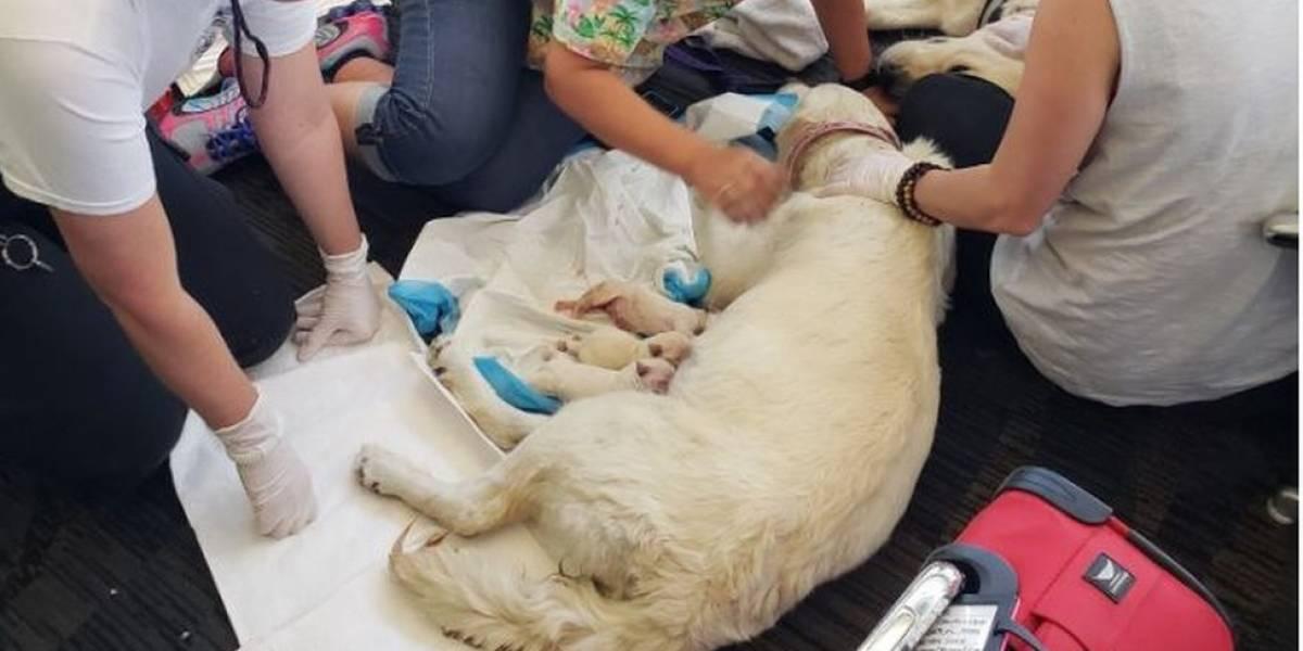 Cachorra dá à luz oito filhotes em terminal de embarque de aeroporto
