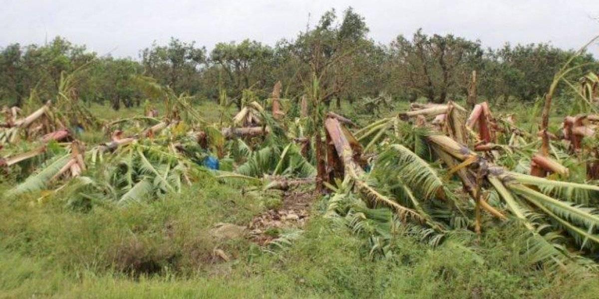 Múltiples los retos de la agricultura local para alimentar en tiempos de crisis