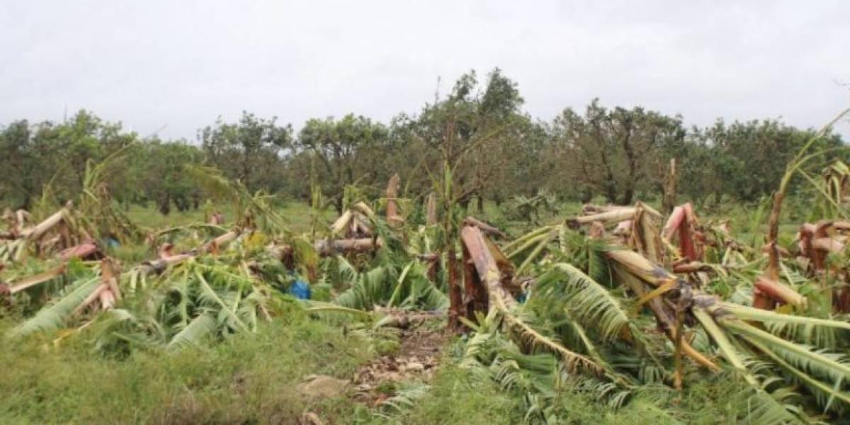 Reclama Secretario de Agricultura que le pongan seguro a la producción agrícola
