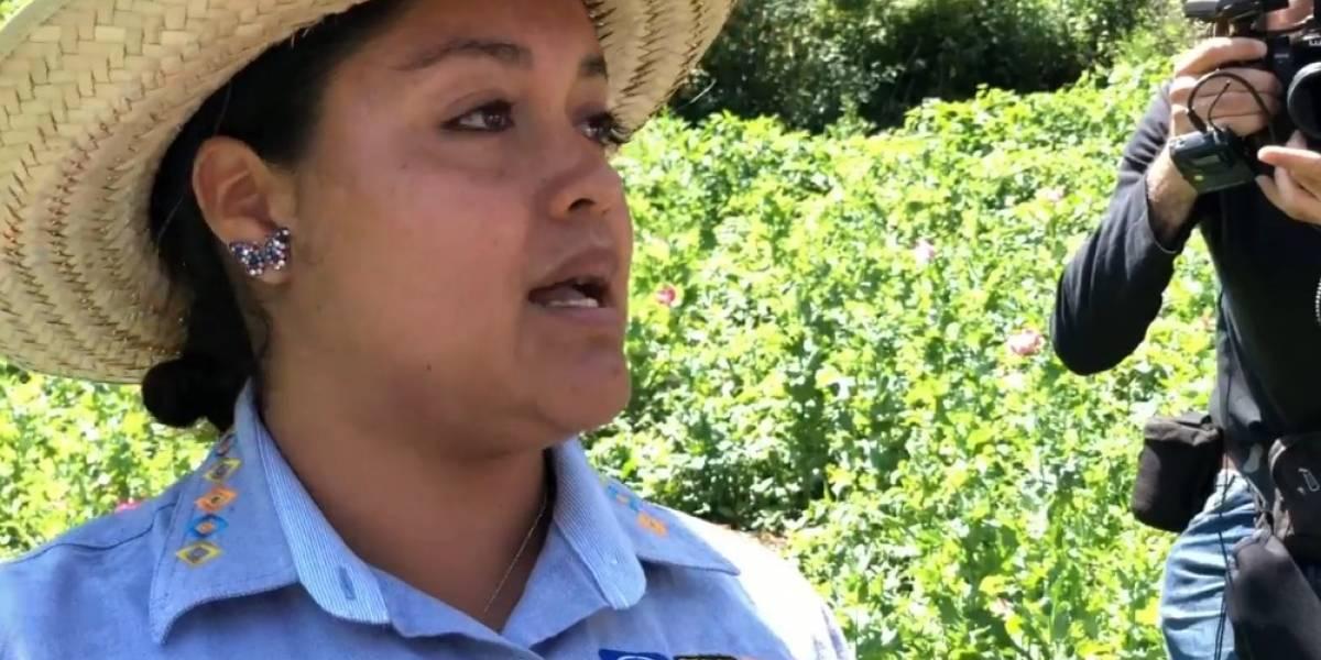 Candidata del Frente propone legalizar la amapola desde un cultivo