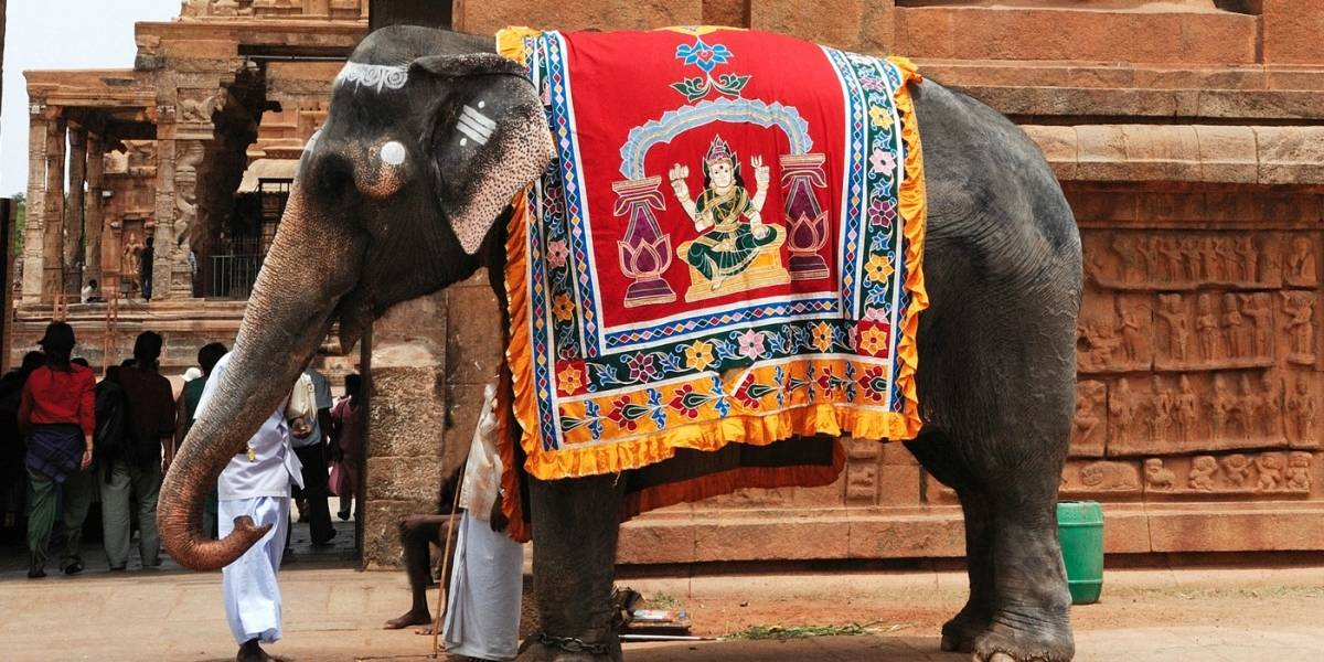 Elefante desató toda su furia contra su cuidador, lo tiró al piso cuando lo estaba montando y lo pisoteó hasta la muerte