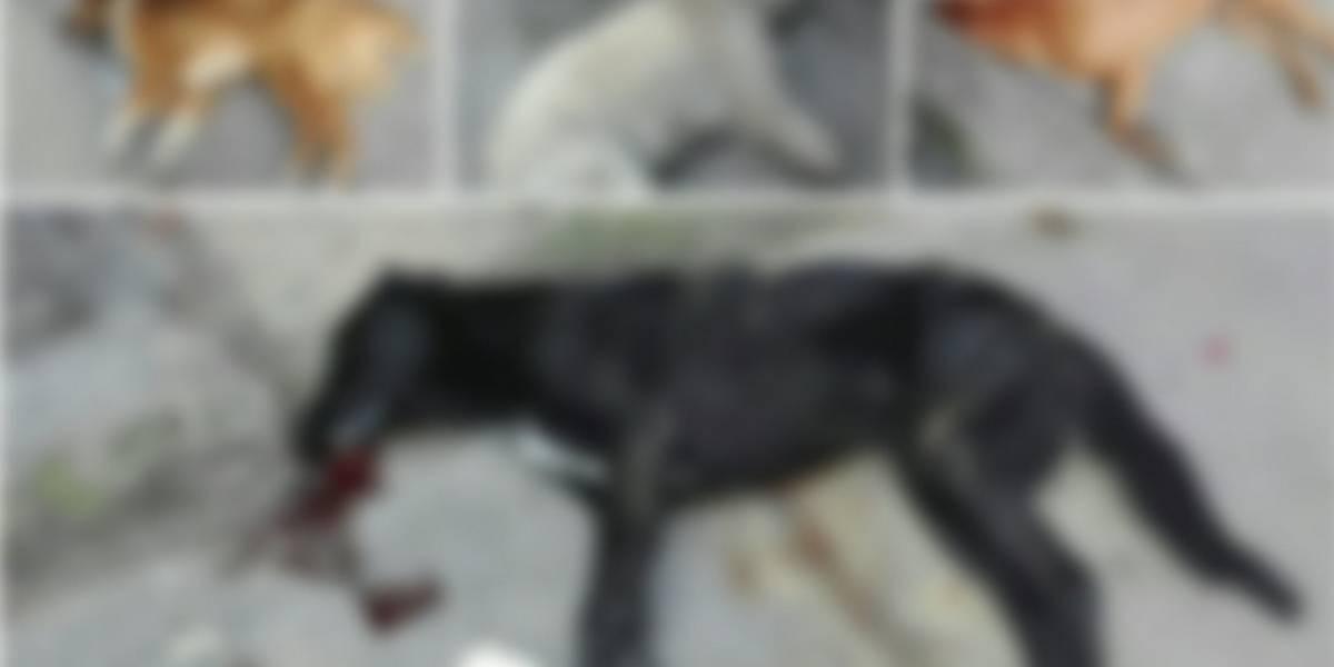 Preocupación por nuevo caso de envenenamiento masivo de perros en Bogotá