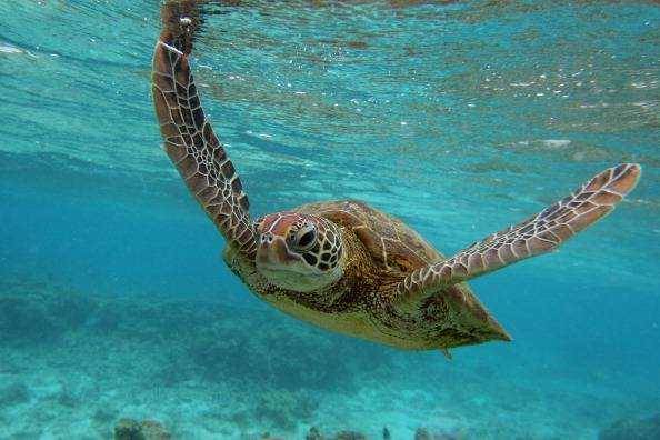 La Gran Barrera de Coral es más resistente de lo que se pensaba