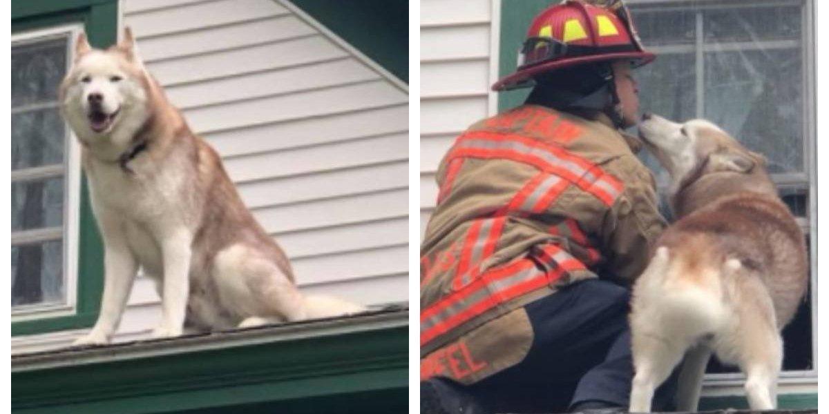 Adorable: perro se subió al techo, no sabía cómo bajarse y encantó a todos con su notable gesto después de ser rescatado por bomberos