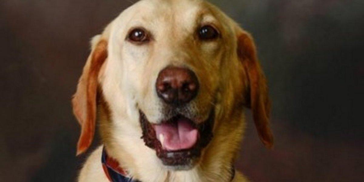 Cachorro de terapia é incluído em anuário de escola nos EUA