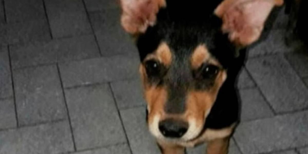 Pequeño tuvo que presenciar el asesinato de su mascota a manos de su vecino