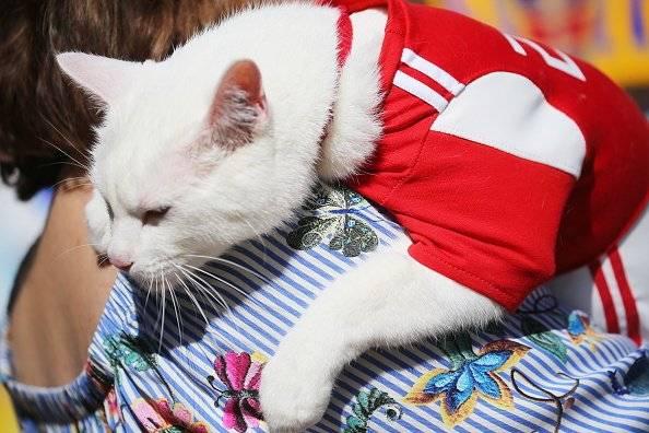 El gato Aquiles está listo para adivinar resultados del Mundial Rusia 2018 Getty