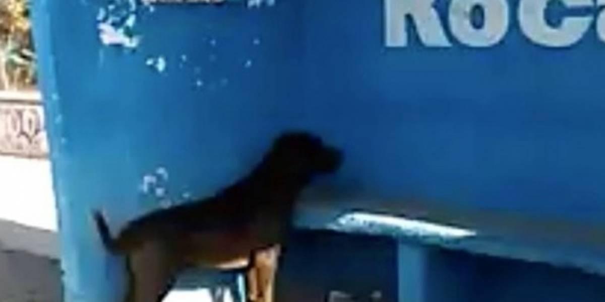 Cachorro passa três dias olhando para uma parede e ninguém sabe o motivo
