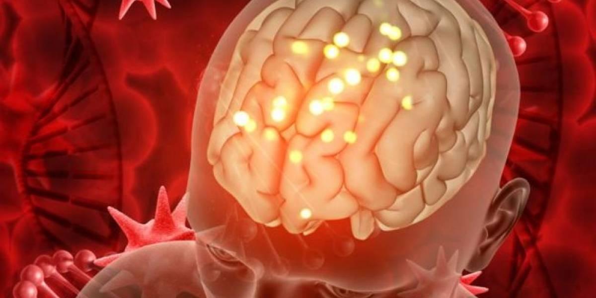 Científicos cambian la historia y descubren que los humanos tenemos dos cerebros: el otro está ubicado en el lugar más inesperado del cuerpo